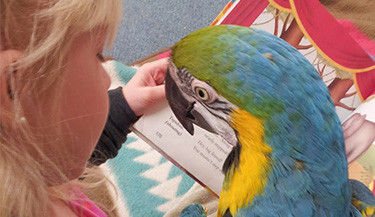 Therapy birds for Pet Partners