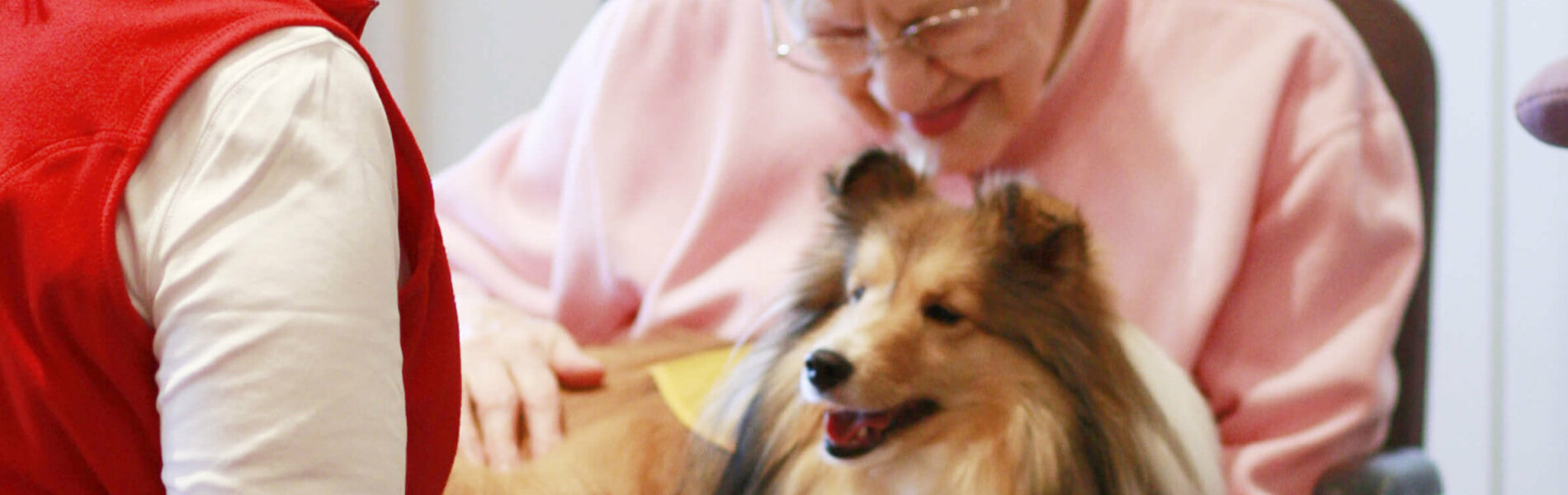A senior woman holds a therapy sheltie with guidance from the handler
