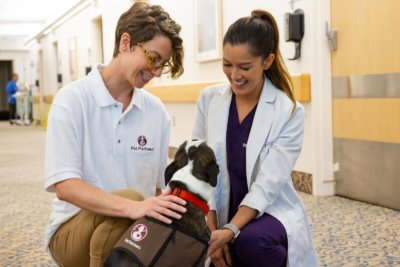 Pet Partners handler and therapy dog Boston terrier meeting a medical professional