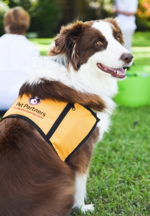 Pet Partners therapy dog