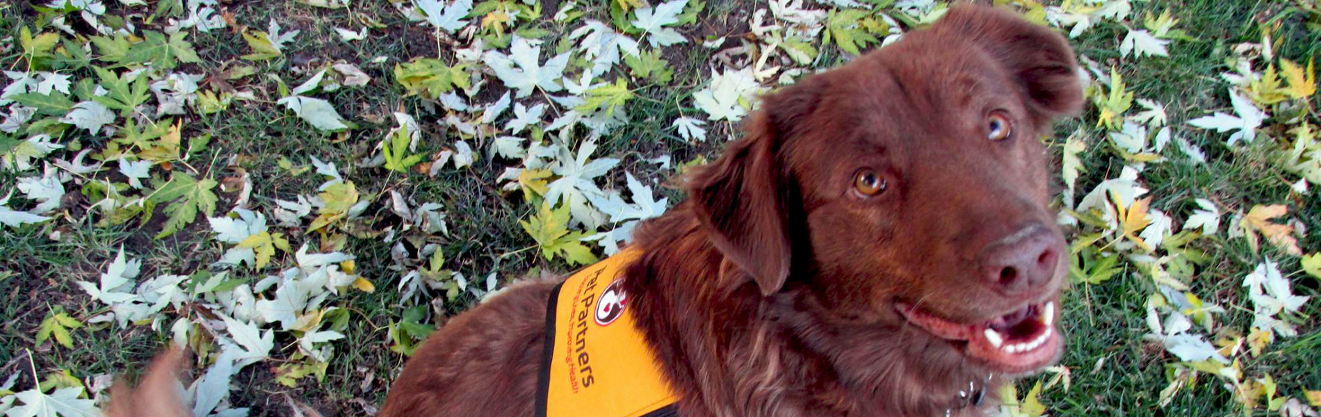 A Day in the Life of a Pet Partners Therapy Dog | Pet Partners