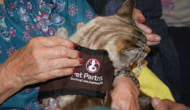 Pet Partners therapy cat