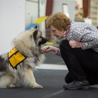A woman holding one paw of a keeshond wearing a Pet Partners vest and looking into the dog's eyes
