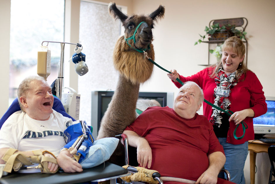 A therapy llama and handler visit with two seniors