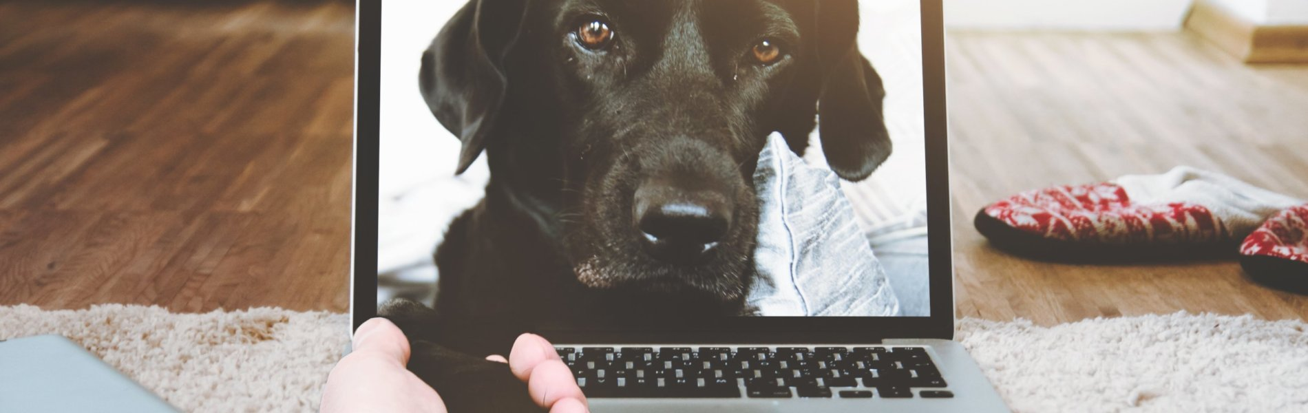 Dog reaching out from a computer screen. Photo by Daniel Frank from Pexels