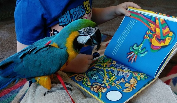 A blue and gold macaw reading a book with a child