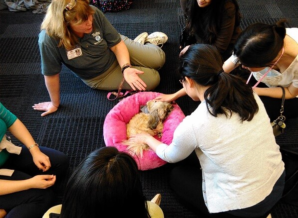 Therapy shih tzu Boo in her bed and handler Deb Gibbs on the floor with several students