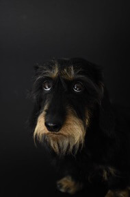 A dark image of a dog looking unhappy or frightened