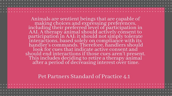 Screen shot of quoted text: Animals are sentient beings that are capable of making choices and expressing preferences, including their preferred level of participation in AAI. A therapy animal should actively consent to participation in AAI: it should not simply tolerate interactions, based solely on compliance with its handler's commands. Therefore, handlers should look for cues that indicate active consent and should end interactions if those cues aren't present. This includes deciding to retire a therapy animal after a period of decreasing interest over time. -Pet Partners Standard of Practice 4.1