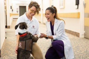 A Pet Partners handler introducing their therapy dog to a healthcare worker. The dog is standing on his back legs and the worker is holding the dog's front paws. Both people are smiling.