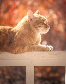 An orange tabby cat lying contentedly on a railing in the sun with eyes closed