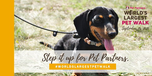 World's Largest Pet Walk 2020 banner with a dachshund on a leash and the words Step It Up For Pet Partners