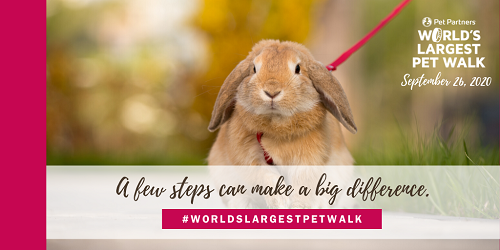 World's Largest Pet Walk 2020 image showing a rabbit on a leash and the words A Few Steps Can Make A Big Difference