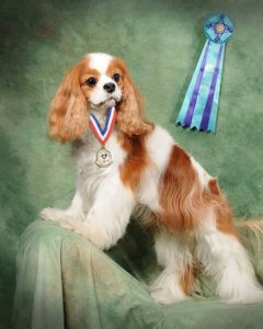 Jessie, a cavalier King Charles spaniel, posing with award ribbons