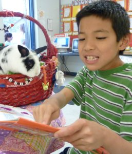 A boy reading a book to a black and white rabbit