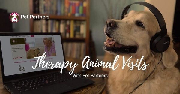 A golden retriever wearing headphones and sitting in front of a laptop screen. Text reads Therapy Animal Visits with Pet Partners