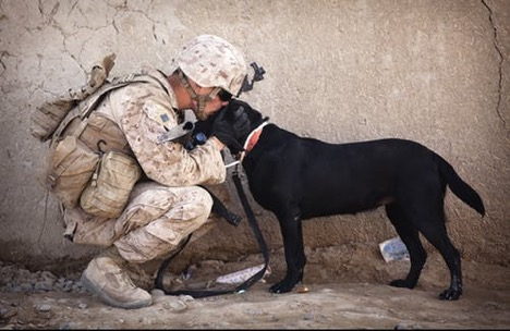 A soldier in combat gear kissing the head of a dog