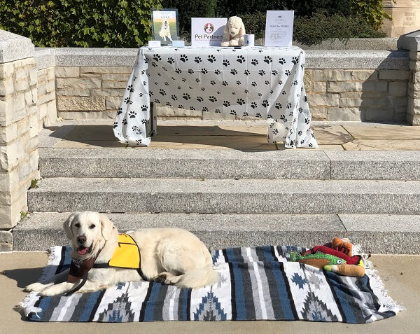 A golden retriever therapy dog wearing a Pet Partners vest and bandanna lying on a blanket in front of a table with Pet Partners promotional materials