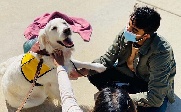 A golden retriever with a happy expression wearing a Pet Partners vest and bandanna while being petted by two people