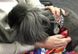 A therapy rabbit being cuddled by a senior