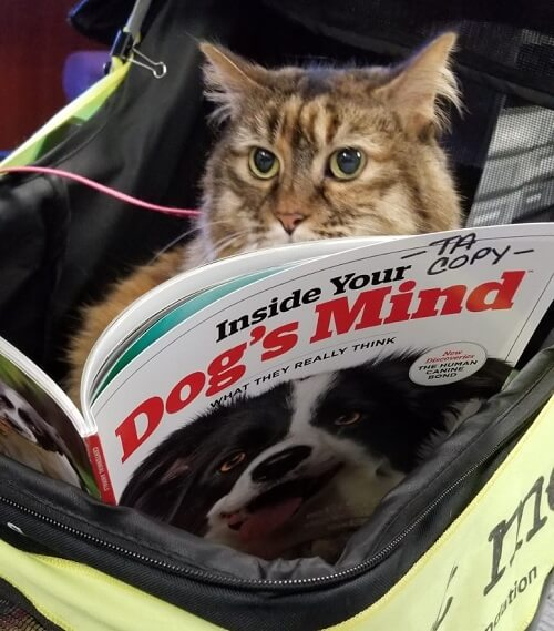 A therapy cat reading a book titled Inside Your Dog's Mind
