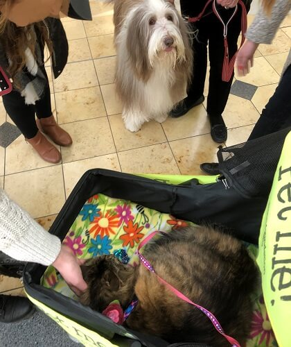 People petting a therapy cat in a stroller, while a therapy dog team watches