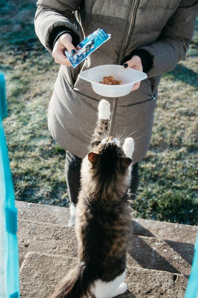A person presenting a bowl of food to a cat