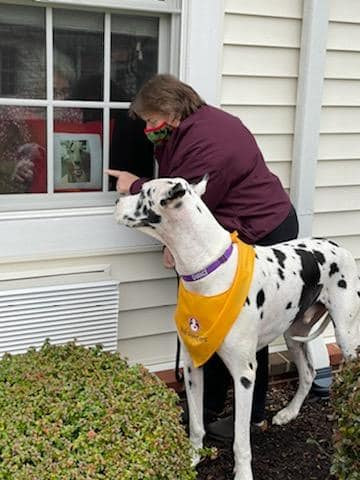 A great Dane therapy dog and his handler making a window visit with a person at a residential care facility