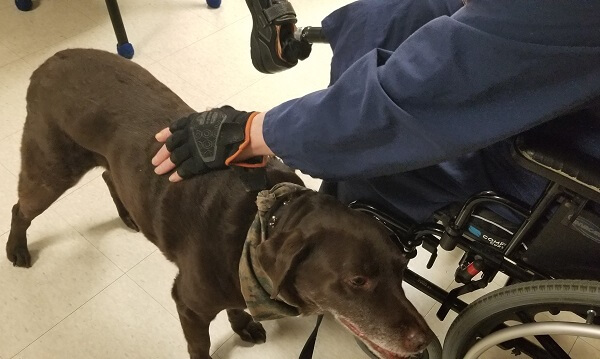A veteran in a wheelchair pets Wilson, a brown Lab mix therapy dog