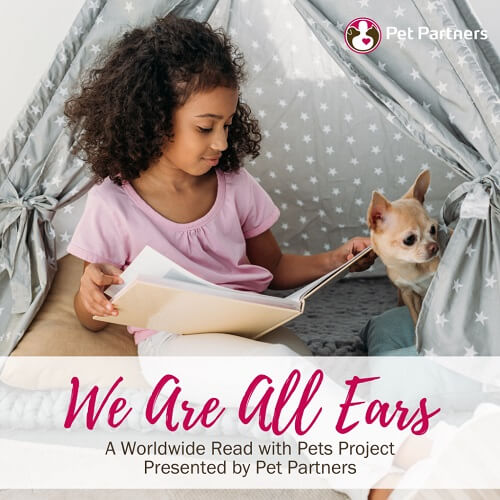 A young girl in a tent reads a book with a chihuahua