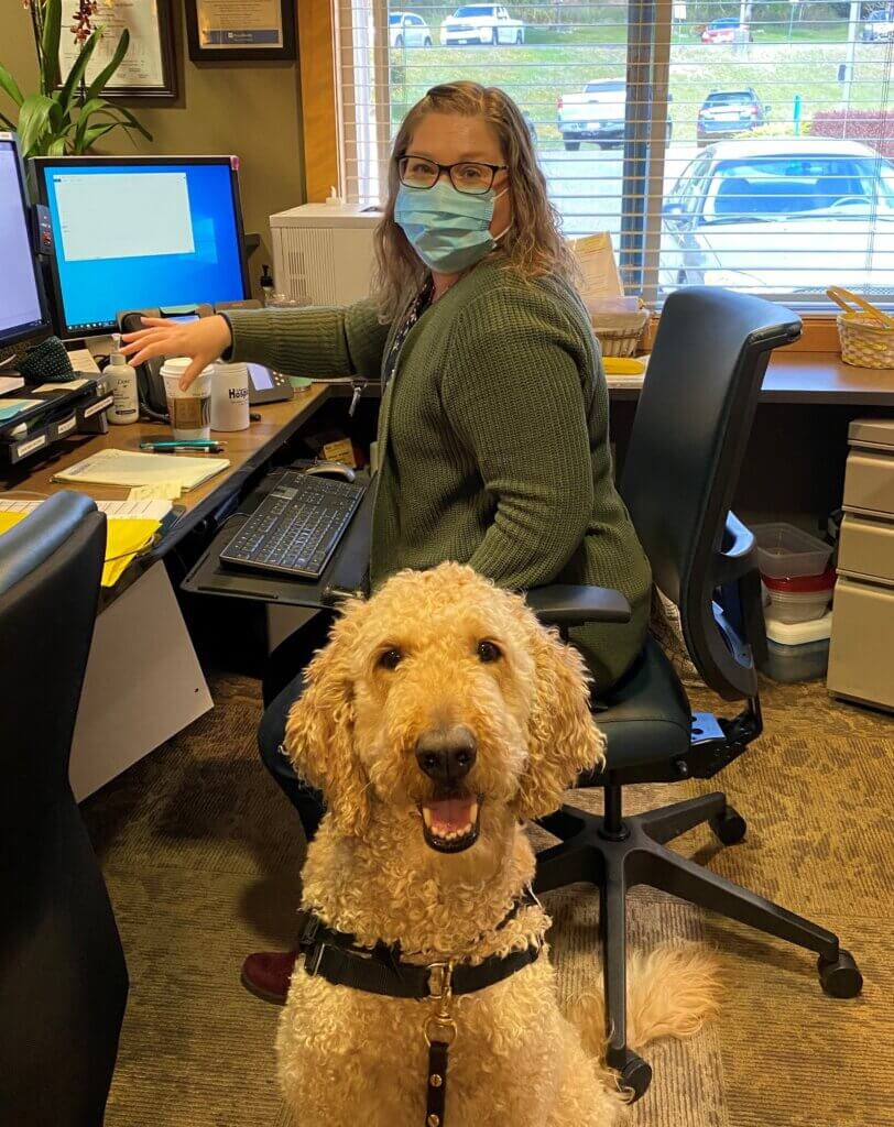 A golden doodle therapy dog visits a hospice staff member in her office