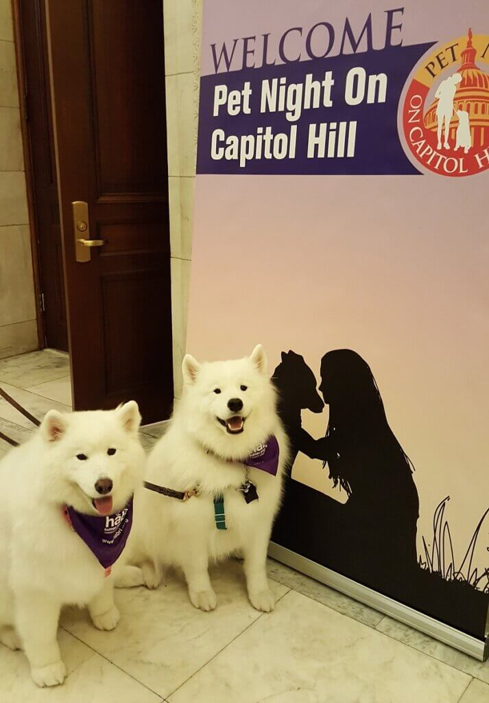 Two samoyed therapy dogs pose in front of a banner for Pet Night on Capitol Hill