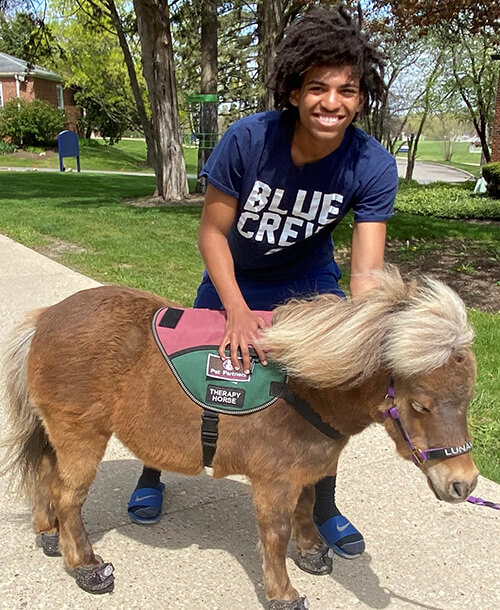 Therapy horse with youth