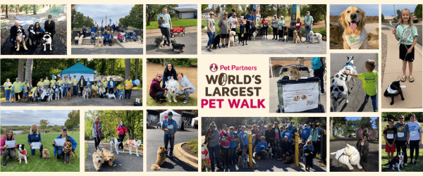 A collage of photos of people participating in the World's Largest Pet Walk