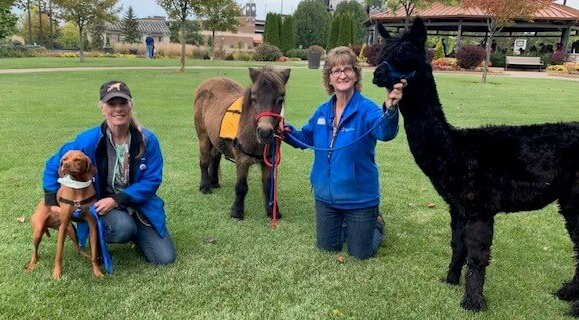 World's Largest Pet Walk participants: a woman with a viszla and another woman with a mini horse and an alpaca